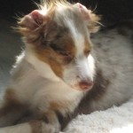 Wordless Wednesday: Puppy Hair Disaster Thumbnail