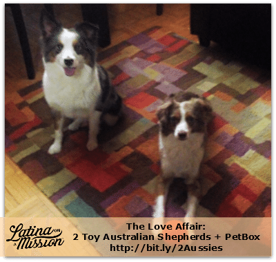 PetBox & 2 Aussies | latinaonamission.com