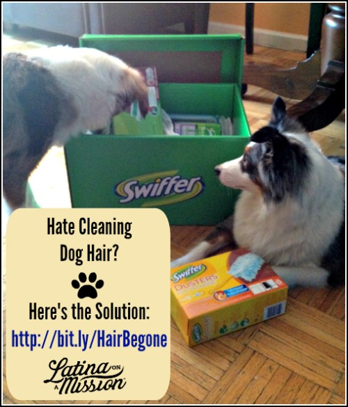Clean Dog Hair Easily! | LatinaOnaMission.com