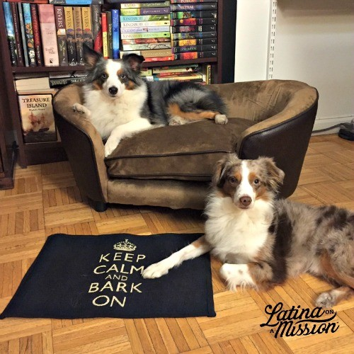 blue-merle-australian-shepherds-Things-You-Should-Never-Say-to-Dog-Owner_latinaonamission.com(1)