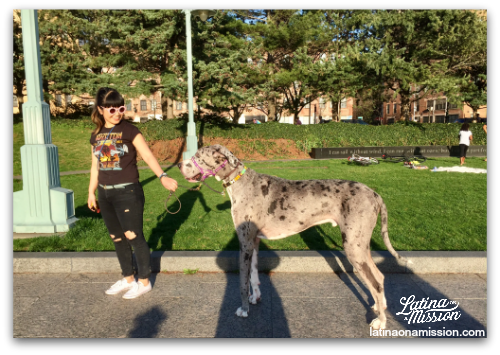 Large dog on pier in New York | Latina On a Mission