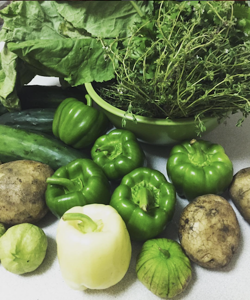 Green peppers, white peppers, lettuce, potatoes, picked from NYC rooftop garden